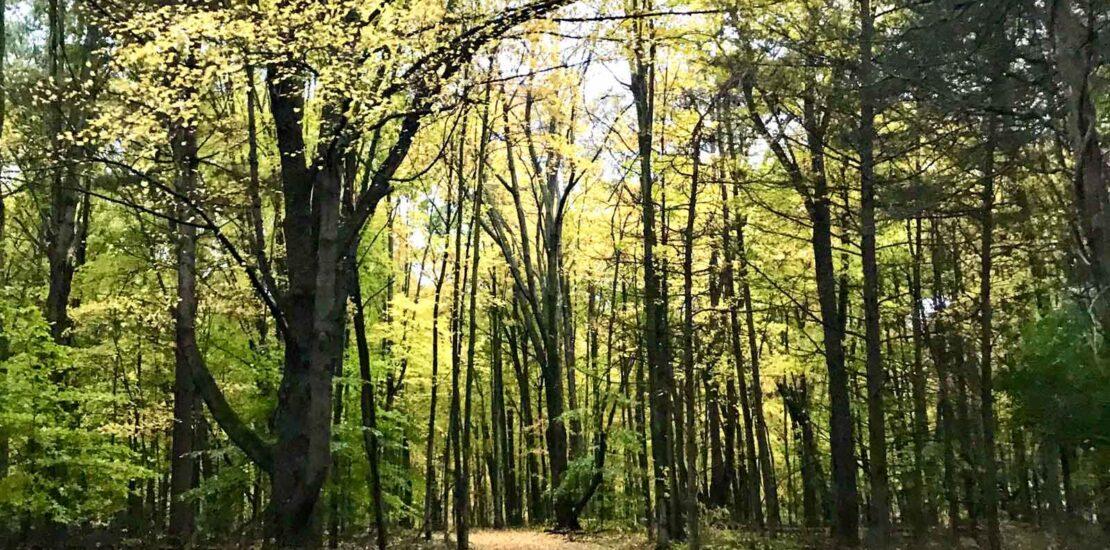 , Το δάσος